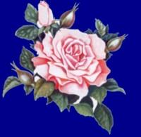FIORI E LEGGENDE Rosa4